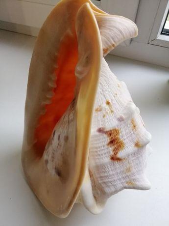 Морская ракушка для аквариума или как предмет декора