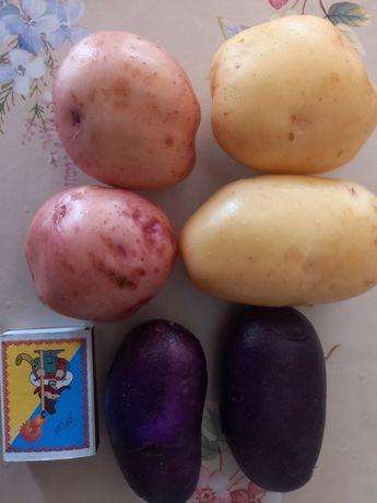 Продам картошку.