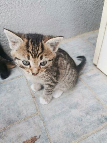 Oddam kotki pod koniec września.