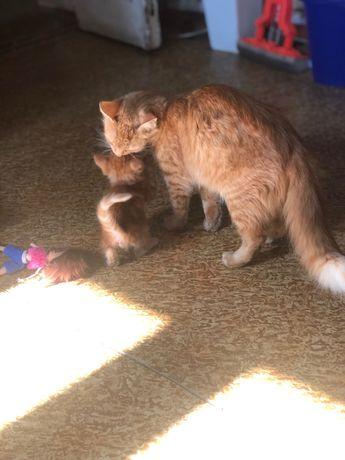 Отдадим котят в хорошие руки)