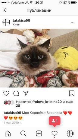 Пропала Кошка Невская Маскарадная Кошечка Пушистая