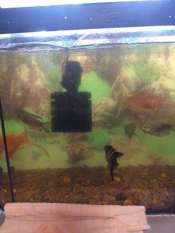 Продам аквариум с рыбами, фильтр и обогрев