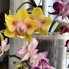 Орхидея, орхидеи