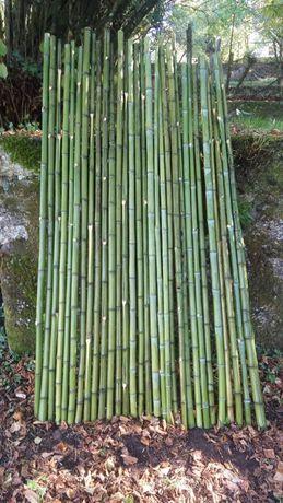 Canas de Bambu Natural