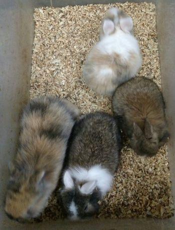 Черные,белые,серые,рыжие кролики