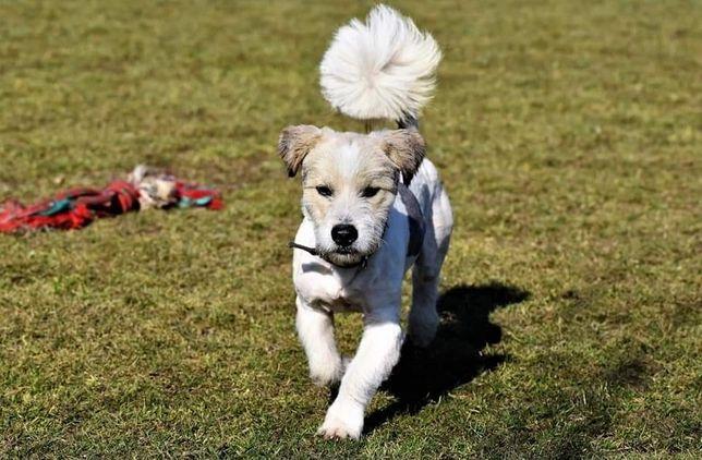 Wesoły rezolutny psiak szuka kochającego i odpowiedzialnego domku