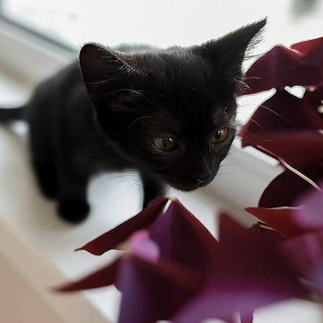Чёрная кошка Аида .