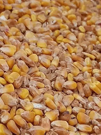 Kukurydza sucha rok zbioru 2020
