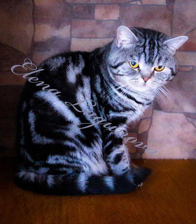 Продается молодой кот