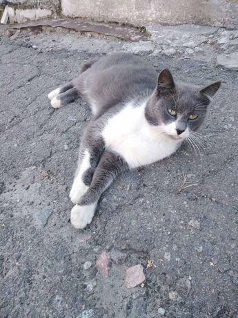 Срочно котов оставляют без дома