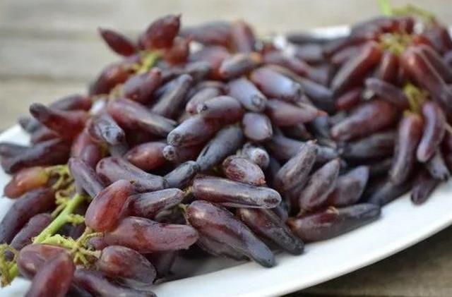 Саженцы винограда. Заказ на весну 2021 года