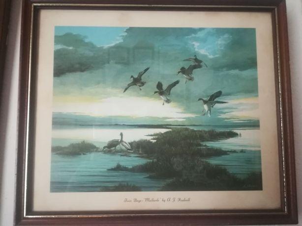 Conjunto de quadros com patos a voar