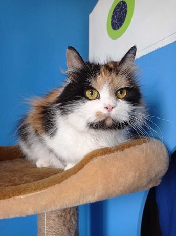 Пушистая роскошная кошка трехмастная