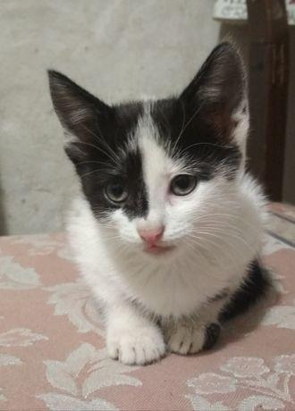 Чёрно-белый котенок