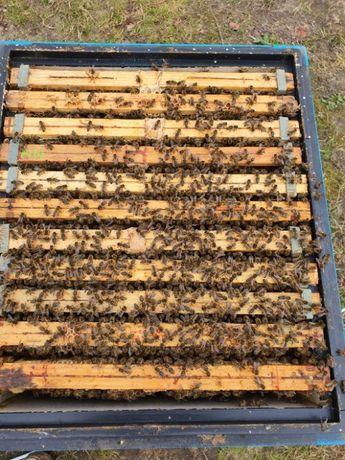 Odkłady pszczele (ramka wielkopolska)