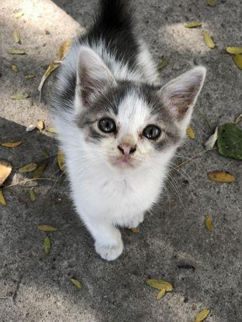Котятки-зайчатки в добрые руки!!!