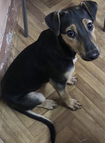 Щенок в добрые ручки собака в дар отдам щенка