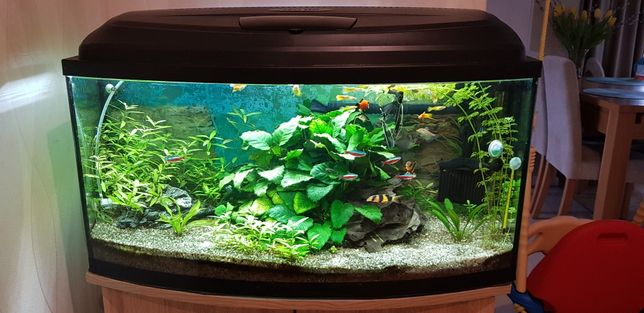Akwarium 120L z rybkami