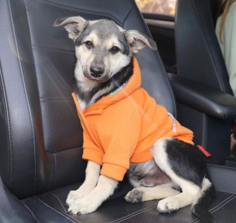 Отдаем щенка в добрые ручки ( щенок щенки собака)
