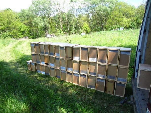 Пчелопакеты -Карпатка на 4-рамки 2020 год с доставкой Васильевка