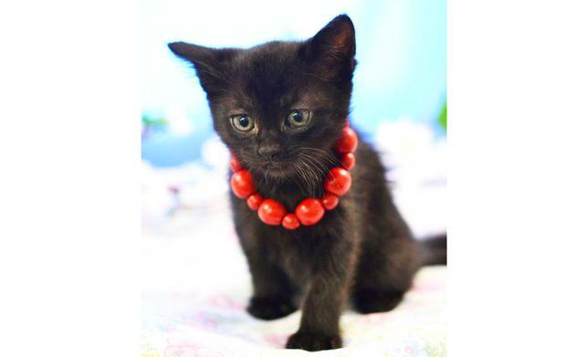 Маленький черный котенок Марфа ищет дом, 1 мес.