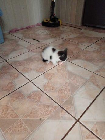 Kotek miau miau .