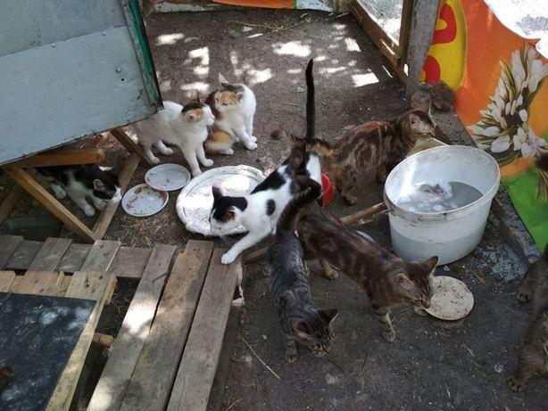 Коты и кошки в дар