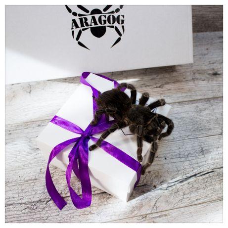 подарок арагог бокс набор паук птицеед павук тарантул+корм субстрат пи
