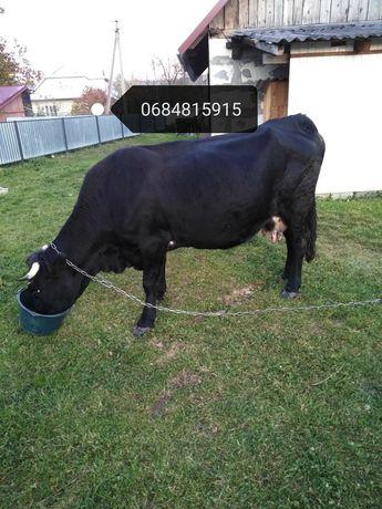 Продам добру корову циганку