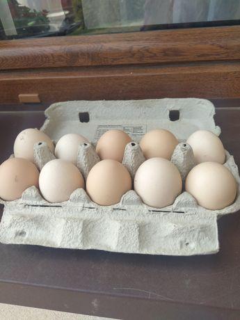 Pyszne i zdrowe jajka