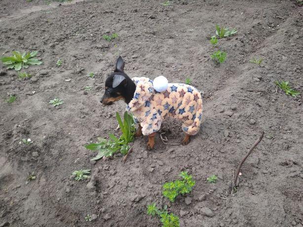 Комбинезон одежда для собак