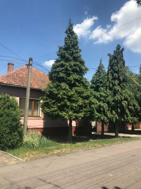 Продам нерухомість(2 будинки в одному дворі) в Росвигові