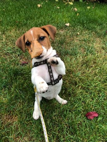 Trixie шлея усиленная для собак