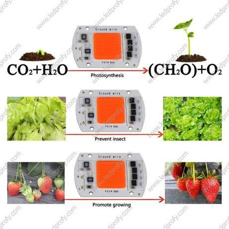 Матрица светодиодиодная COB, фитоматрица led grow, 30W, 50W 220V