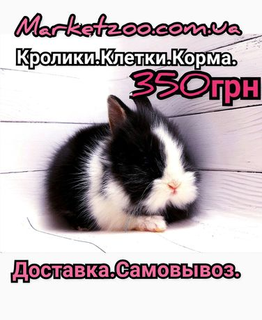 Карликовые супер мини декорат.торчеухие и вислоухие кролики и клетки