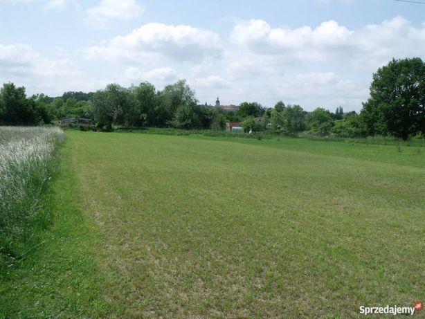 Łąka, trawa do koszenia