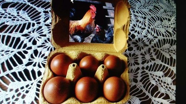 Jaja lęgowe Marans