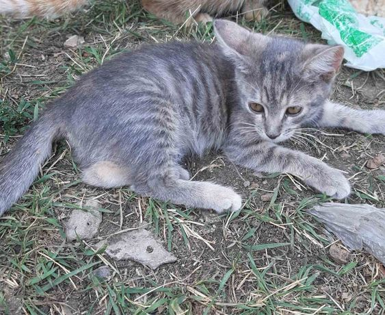Отдам котёнка-девочку Зизи