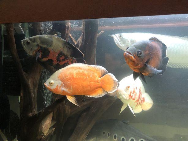 Обслуживание аквариумов. Чистка аквариумов.