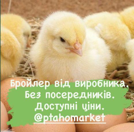 Бройлеры Бройлер Кобб500 Цыплята