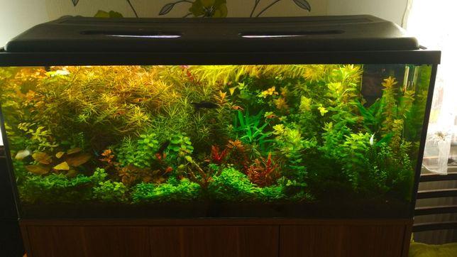 Zestaw roślin akwariowych łatwych w uprawie
