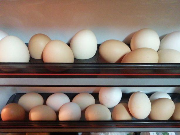 Ovos caseiros frescos