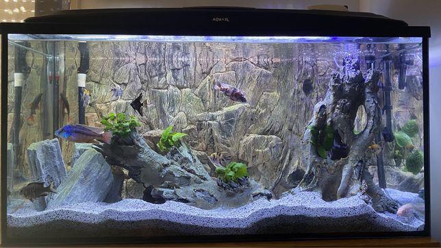 Aquario 200L completo