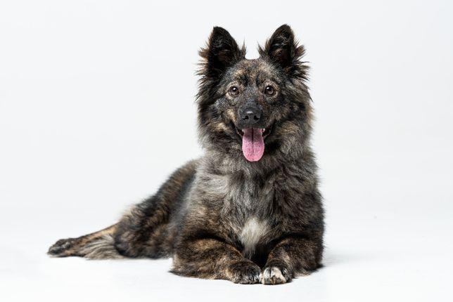 Собака Щенок Умка ищет дом, стерилизована