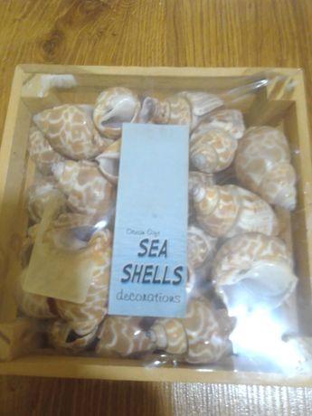 Ракушки морські