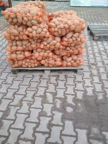 Sprzedam ziemniaki jadalne MICHALINE