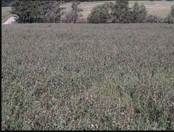 Ekologiczna Koniczyna Czerwona oraz Mieszanki Kośno-Pastwiskowe EKO