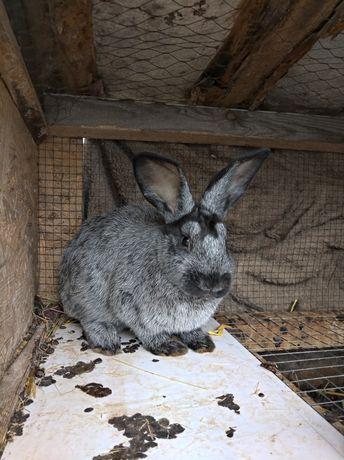 Продам кроликов и мясо кроликов