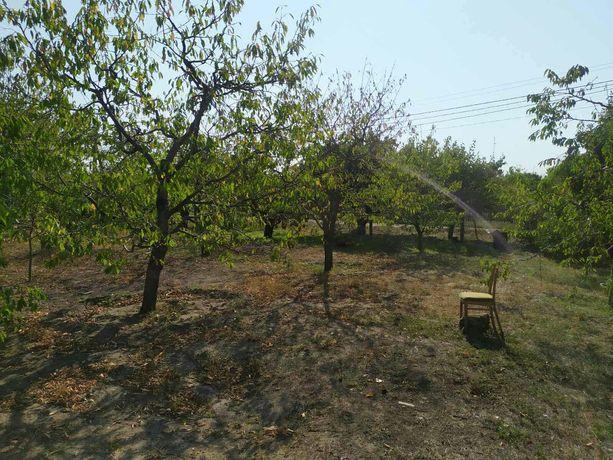 Садовый участок , ухоженный с плодовыми деревьями