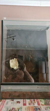 Terarium szklane